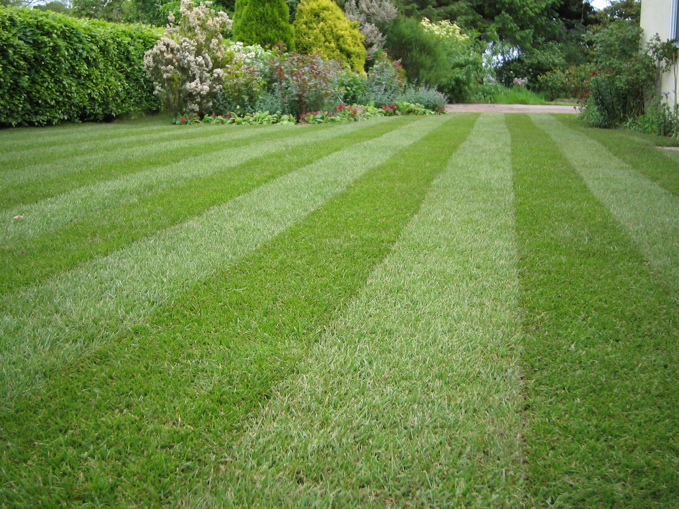 Garden maintenance services belfast eden gardens for Gardening and landscaping